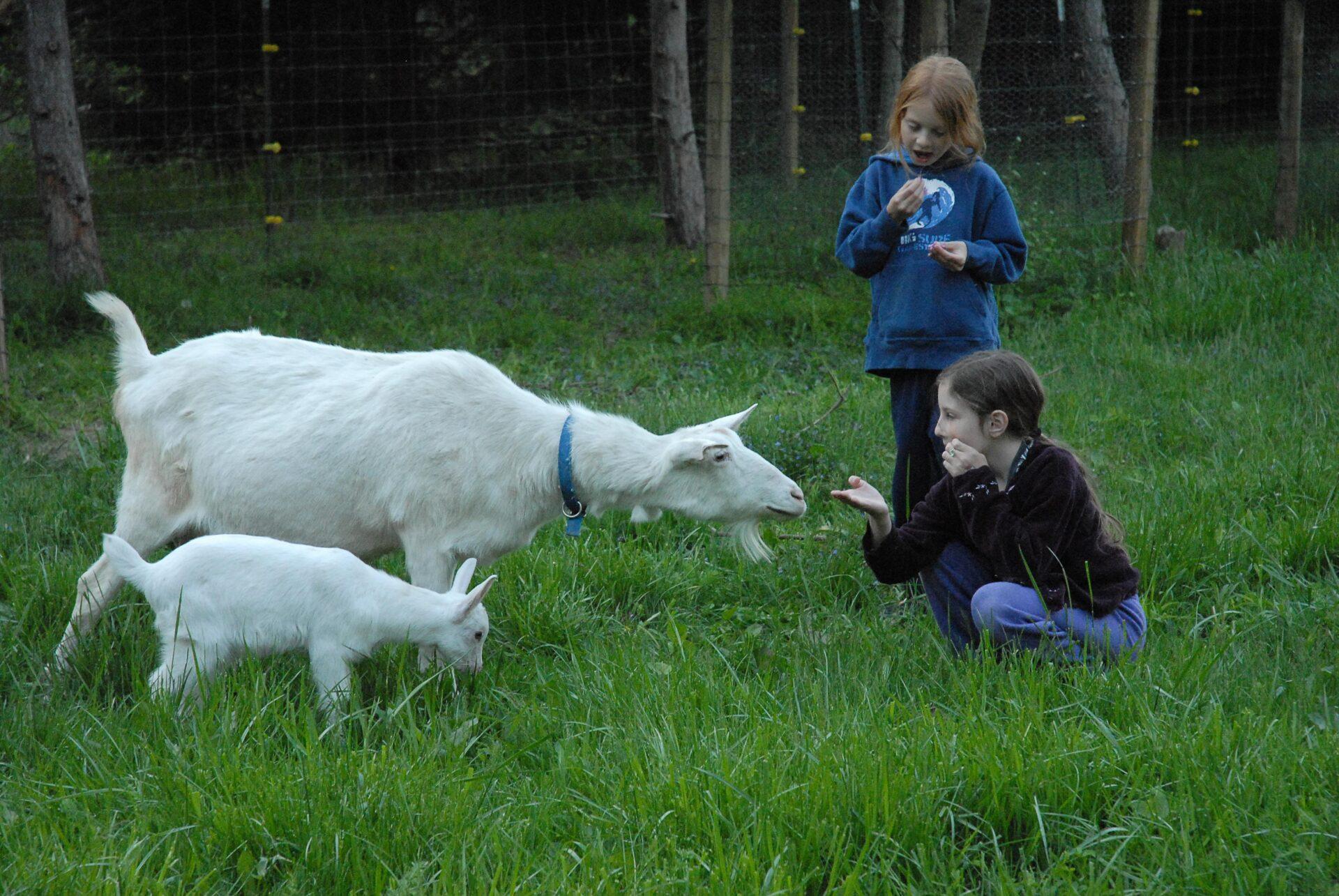 Goats-Emma-Elliot-Farm-Liberty-Indiana-2006 (15 of 18)