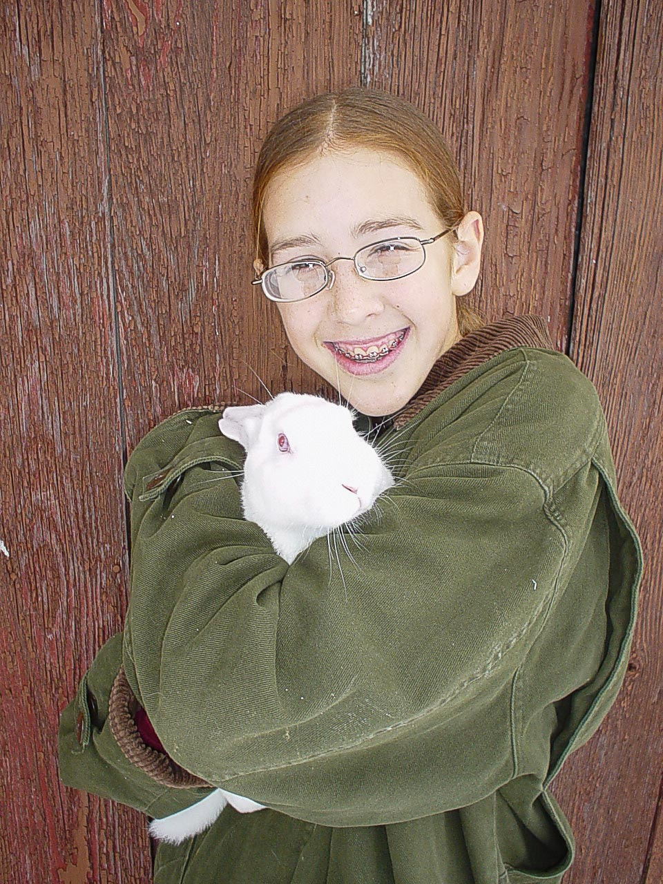 Rabbits 3138